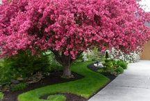 Flores, Jardim & cia...