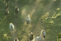 Anders met paarden / Freestyle, western riding, natural horsemanship, mindfulness