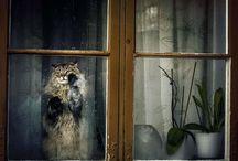 Derrière la fenêtre`•. ¸ ¸. ☆
