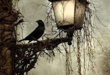 OKKVLT - Crow/Raven