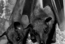 Theme :: Bats / Photos, artworks and other creations from around the world about bats