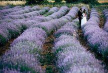 Φωτογράφηση γάμου σε χωράφι με λεβάντα!