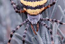 Spider & Tarantula