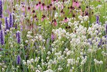 Präriegarten - Prairie Garden
