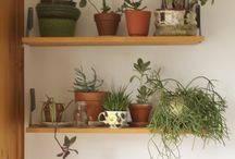 house plants and gardening