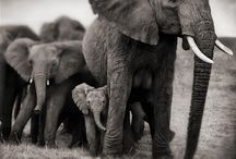 Elephants I adore :-)) / by Kelly Trammell