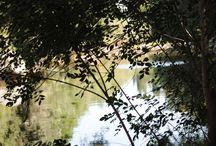 CHARCO DE HORCO - GARGANTA DE ALARDOS / En el cauce de la Garganta de Alardos, corriente abajo de la piscina natural, el agua se remansa y crea un paraje de una belleza sorprendente.  Es el Charco del Horco, un lugar recóndito y escondido entre la exuberante vegetación, el que la luz y los reflejos crean un paisaje de leyenda.