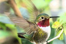 Tayr (Bird)