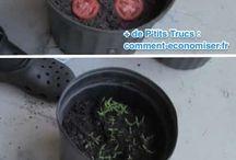 Plantes et légumes