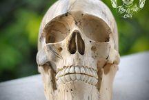 RARE Human Skull Realistic Hand Carved Tamarind Wood  THB3