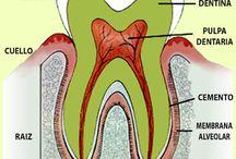 Odontología ⚕️