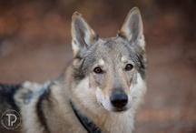 Lupi- wolf