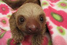 Baby Animal Love