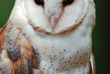 I Love Owls / by Susan Williams