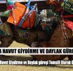 Antalya'da Havut Giydirme ve Daylak Güreşi Yapıldı