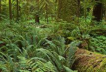 Native plants BC