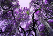 My favorite COLOR PURPLE!!!