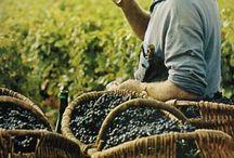 wine & conviviality