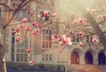 magnolia's Beautiful!!!