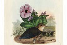 Monograph of the Pittidae from Daniel Giraud Elliot