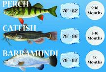 Aquaculture/Aquaphonics