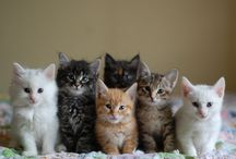 Kitties...For me Purr,feet Little Friends :) / God Loves All Creatures, Large And Small... / by Mary Beth Elliott