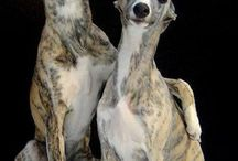 Whippets and Greyhounds