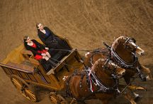 The Pennsylvania Farm Show / All things Farm Show related / by PennLive.com