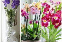 pokojove květiny