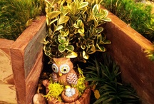 Fairy Garden at Apple Barrel Country Store / Fairy gardens are the hottest new trend in gardening. And we have all of the hottest pieces for them!