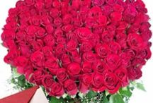 Gifts For Rose Day / Here you can find latest roses for your cute love. Giftalove is one of the largest place which have great fresh flowers with smae day delivery.