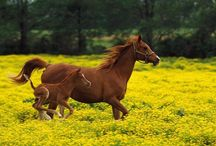 Horses / by Cheryl Close
