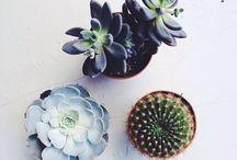 bloomin desert / botanical cactus succulents