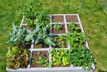 kert, garden / növények