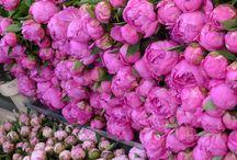 flores / by Oliva De La Fuente Gallego