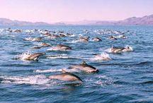 Sea Of Cortez  / by Visit Baja California Sur