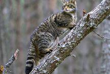 WILD ANIMALS / by Linda ferg