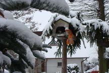zima / śnieżne uroki