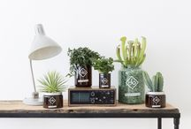&Vitamin Plants For Men / Stuck for what plant will work in your man cave? Check out our top picks of strong, resilient plants with your name on it. Which #VitaminPlant is most you? http://www.thejoyofplants.co.uk/vitamin-plant-men