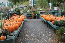 Pumpkin Pickin' / Decorating, carving...