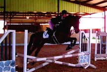 American Saddlebreds / American Saddlebreds are a versatile and exciting breed of horse that can be ridden or driven in any division!