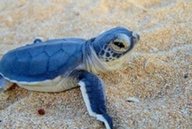 turtles! <3 / by Jayme Z