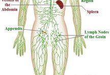 Lymph&Immune system
