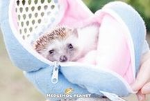Hedgehog *.*