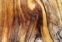 ⍋ Wood / by jrachelle