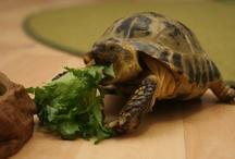 Kilpikonnat / Turtles