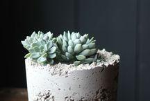 plantas e cia