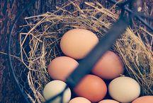 Hønedrøm i hagen