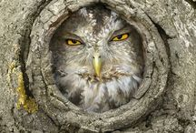Owls / by Susan Keferl