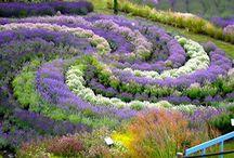 kerti csodás szépségek